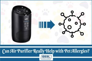 Can Air Purifier Really Help with Pet Allergies?