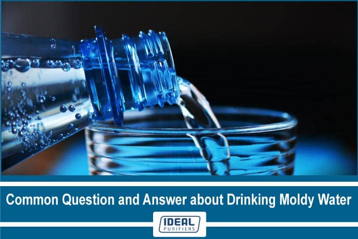 Common Question and Answer about Drinking Moldy Water