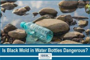 Is Black Mold in Water Bottles Dangerous